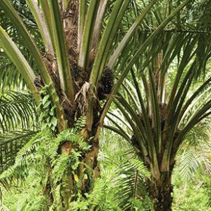 DuPont Nutrition & Health reaches 100% certified sustainable palm oil emulsifiers